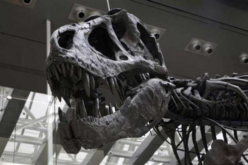 Dino6_Thomas