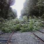 Trees block train tracks. (Courtesy MTA)
