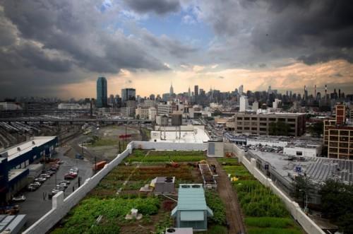 Urban farming legislation passed. (via Inhabitat)