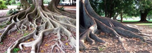 RubberTree proposal finds inspiration in sinuous tree roots. (Courtesy AnneMarie van Splunter)