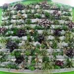 The central wall of garden boxes (Shift_Design)