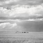 Ranch Northeast of Keota, Colorado, 1969. (Robert Adams/LACMA)