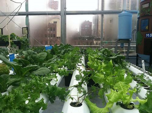 Another Bright Farms hydroponic farm. (Courtesy Bright Farms)