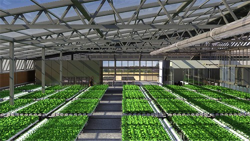 Inside the rooftop greenhouses. (Courtesy Bright Farms)