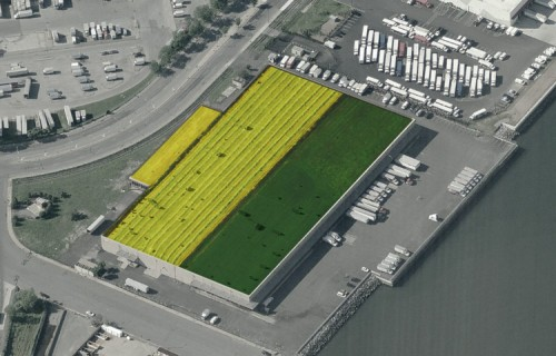 One of the biggest rooftop farms in the world may land in the Bronx. (Montage by AN)