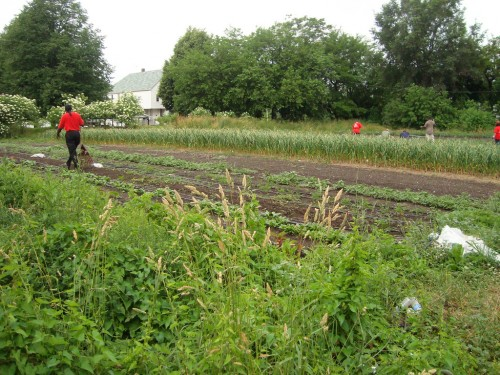 earthworks farm Detroit