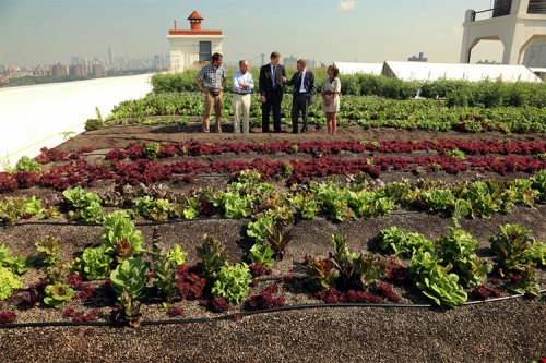 Mayor Bloomberg, Department of Environmental Protection Commissioner Strickland, Brooklyn Navy Yard Development Corporation CEO Kimball and Brooklyn Grange CEO Ben Flanner today toured the largest rooftop farm in New York City. (Edward Reed)