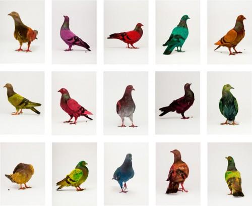 """Pigeon Safari"" by Julian Charrière and Julius von Bismark. (Courtesy the artists)"