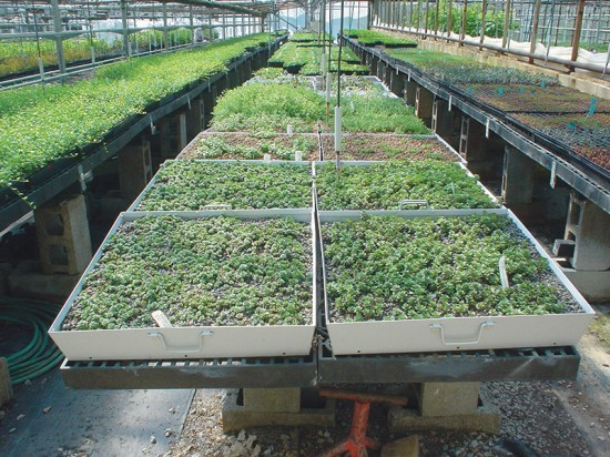 Green Roof Blocks by Green Roof Blocks.