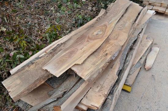 Miller Pin Oak. (Elizabeth Peters)