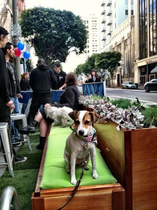 Fiona, one of the Spring Street Parklet's first visitors. (Sam Lubell / AN)