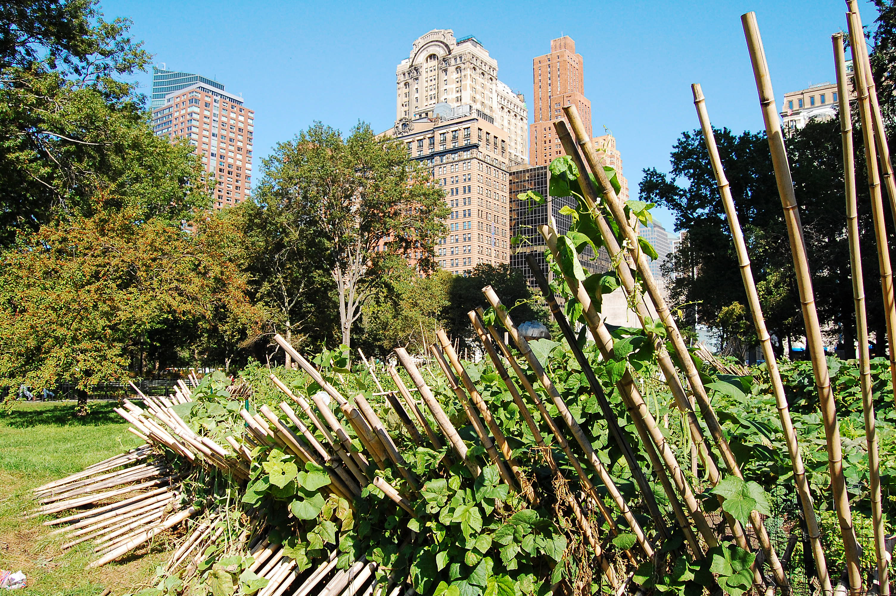 The Battery Urban Farm before Sandy (Courtesy The Battery Conservancy)