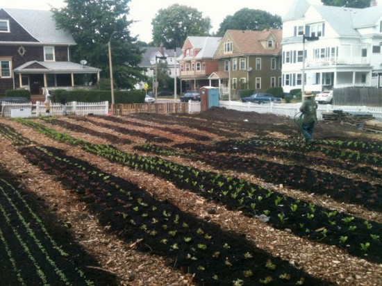 The first phase of the Mayor's Pilot Urban Agriculture Rezoning Project involved issuing an RFP seeking farmers to create a farm on two city-owned properties in South Dorchester. City Growers was selected and now operates two farms in Boston. (Courtesy of City Growers Boston/Facebook)