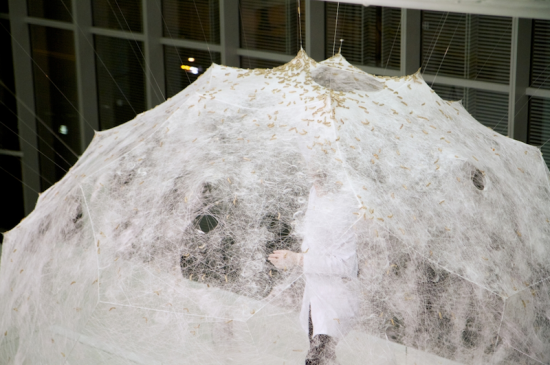 Silkworms gather atop the pavilion (Steven Keating/Courtesy Mediated Matter)