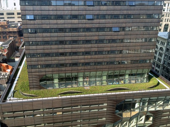 A green roof has been installed at Parsons The New School for Design. (Susan Kramer / AN)