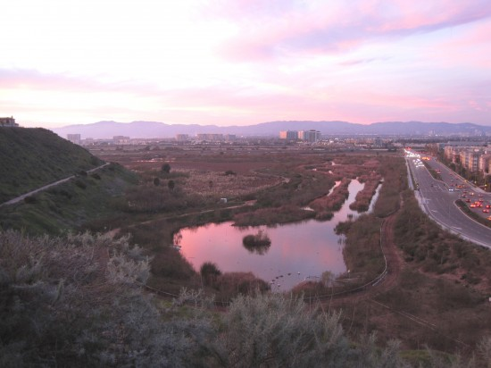 A view of Ballona Wetlands from above (friends of Ballona Wetlands)
