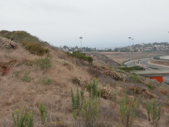 Restoration of the El Segundo Dunes, near LAX, is ongoing. (Travis Longcore)