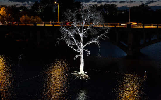 GHOST TREE ON LADY BIRD LAKE (COURTESY THIRST)