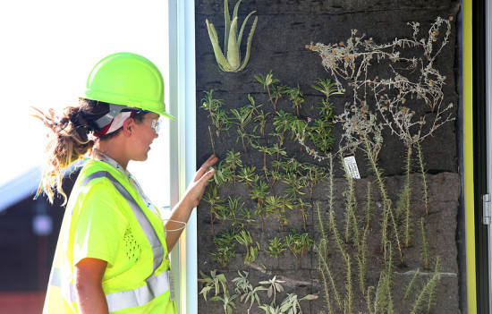 A student from USC inspects her team's green wall. (DOE)
