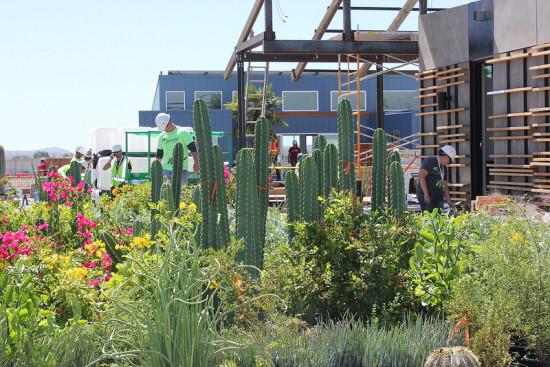 Arizona State/ University of New Mexico's entry is full of desert plants. (DOE)