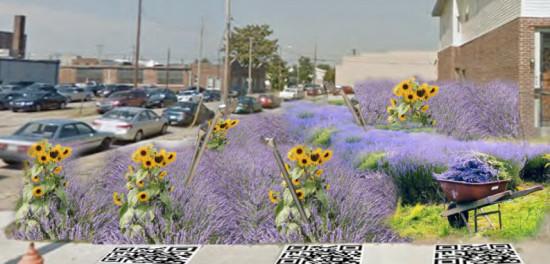 (lots of lavender)