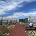 Sustainability strategies include a green roof. (Courtesy Alexander Gorlin Architects)