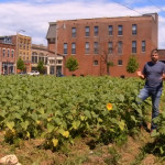 Don Koster helped turn a vacant lot on the 5100 block of Delmar Avenue in St. Louis into a sunflower field. (video screengrab courtesy Washington University in St. Louis)