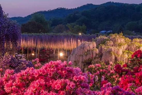 Ashikaga Park (Courtesy Sarah Sutter)
