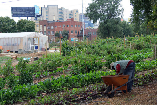 Urban farming in Atlanta (Courtesy UGA College of Agriculture and Environmental Science)
