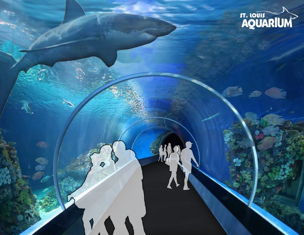 Aquarium and shark tank planned for st louis 39 s union for Shark fish tank