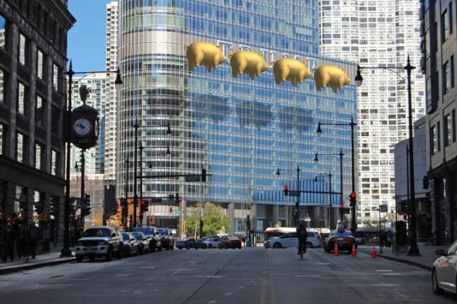 Trump Chicago Gold Pigs