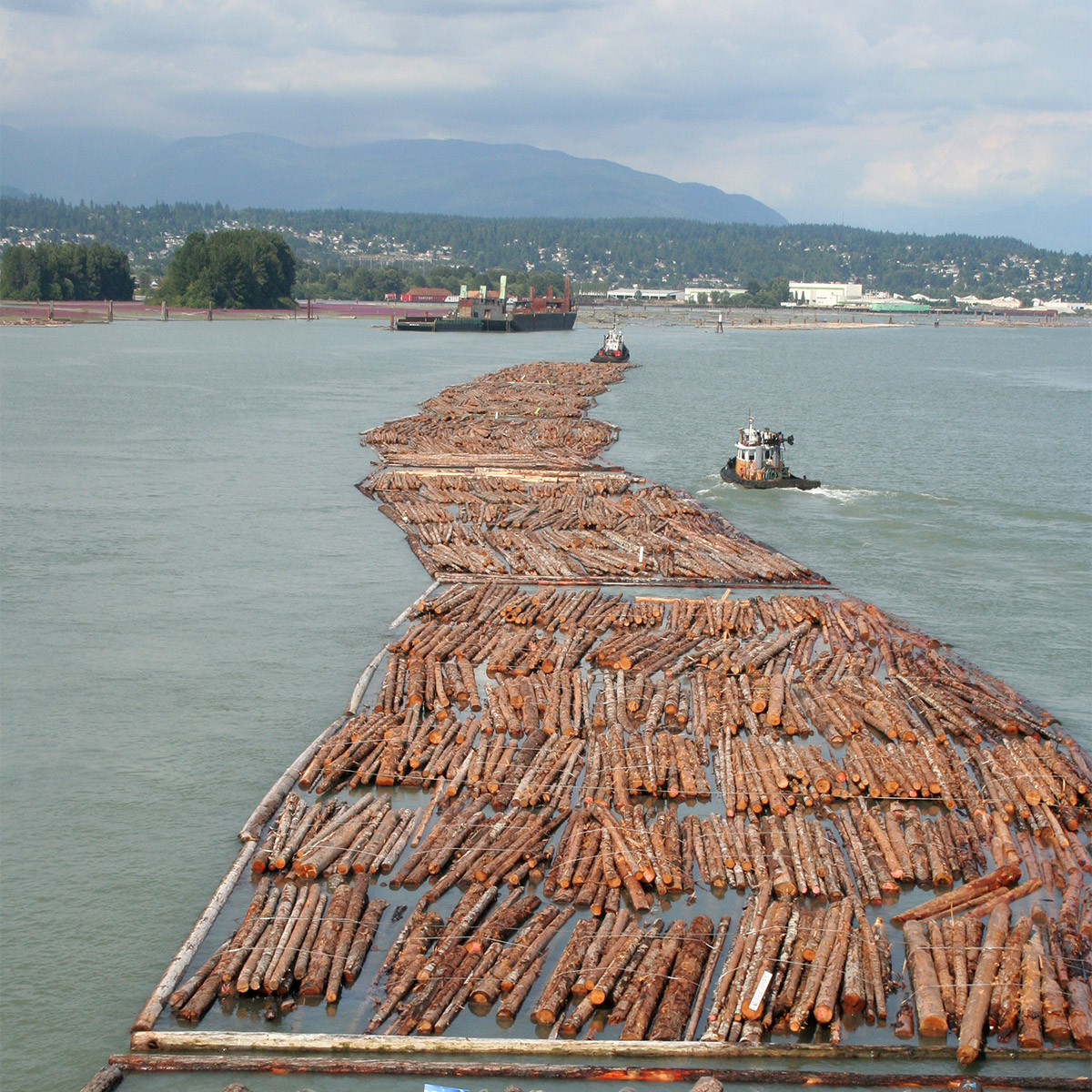 The Lumber Industry Responds To The Rise Of Mass Timber